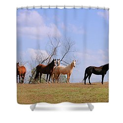 Shower Curtain featuring the photograph Horses On The Hill by Bonnie Willis