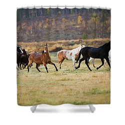 Shower Curtain featuring the photograph Horses by Sharon Jones