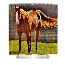 Horse's Tail Shower Curtain