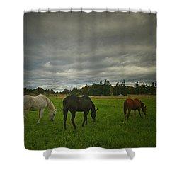 Horses Under Heavy Sky Shower Curtain