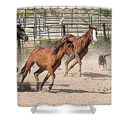 Horses Unlimited #3a Shower Curtain