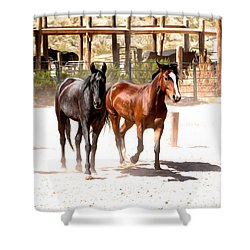 Horses Unlimited_6a Shower Curtain