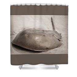 Horseshoe Crab Shower Curtain