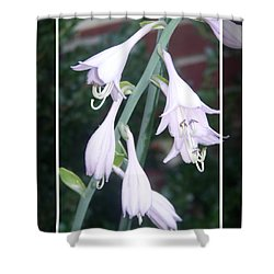 Hosta Bloom 2 Dark Frame Shower Curtain