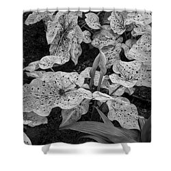 Hosta Bw - Pla363 Shower Curtain by G L Sarti