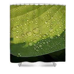 Shower Curtain featuring the photograph Hosta Drops by Jean Noren
