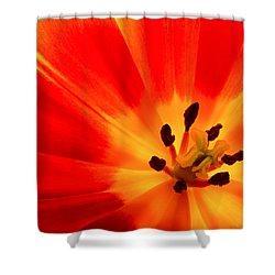 Hot Air Tulip Shower Curtain