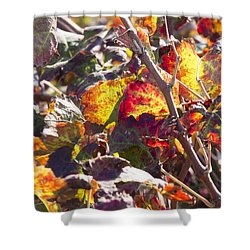 Shower Curtain featuring the photograph Hot Autumn Colors In The Vineyard 02 by Arik Baltinester
