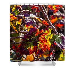 Hot Autumn Colors In The Vineyard 04 Shower Curtain by Arik Baltinester