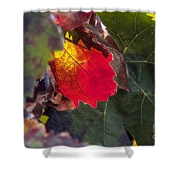 Hot Autumn Colors In The Vineyard Shower Curtain by Arik Baltinester