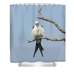Hot Date Shower Curtain by Jim Gray