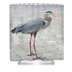 Hot Dog Eating Great Blue Heron Shower Curtain
