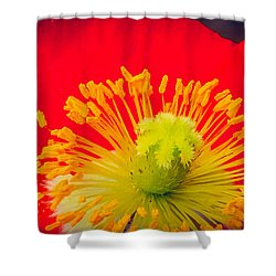 Shower Curtain featuring the photograph Hot Hot Hot by Cathy Donohoue