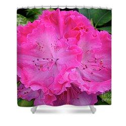 Hot Pink Rhoda Shower Curtain