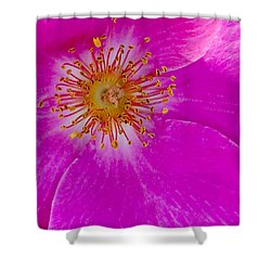 Hot Pink Rose 1 Shower Curtain by Art Block Collections