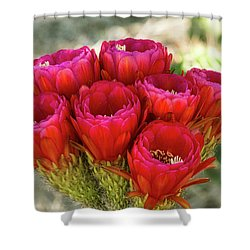 Shower Curtain featuring the photograph Hot Pink Torch Cactus Bouquet  by Saija Lehtonen