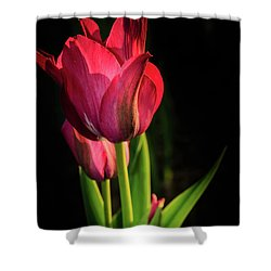 Hot Pink Tulip On Black Shower Curtain