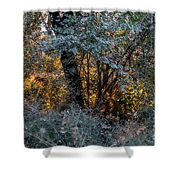 Hot Sunset In The Forest Shower Curtain