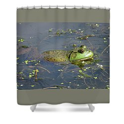 Shower Curtain featuring the photograph Hot Tubbin It Froggie Style by Brooks Garten Hauschild