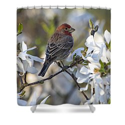 Shower Curtain featuring the photograph House Finch - D009905 by Daniel Dempster