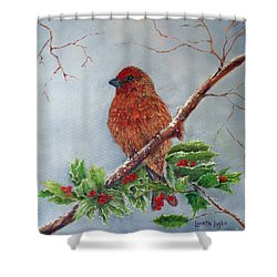 House Finch In Winter Shower Curtain