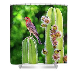 House Finch On Blooming Cactus Shower Curtain