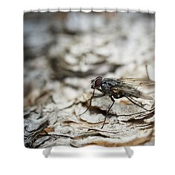 Shower Curtain featuring the photograph House Fly by Chevy Fleet