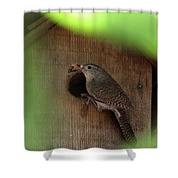 House Wren Brings Breakfast Shower Curtain