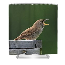 House Wren Stony Brook New York Shower Curtain by Bob Savage