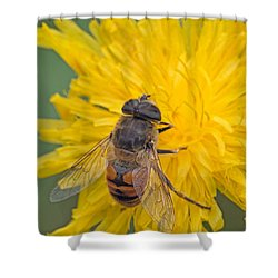 Hover Fly On Sow Thistle Shower Curtain