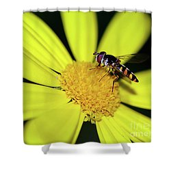 Shower Curtain featuring the photograph Hoverfly On Bright Yellow Daisy By Kaye Menner by Kaye Menner