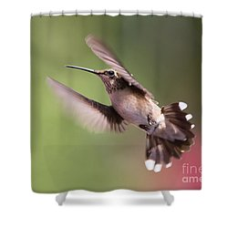 Hovering Hummer 2 Shower Curtain by Kevin McCarthy