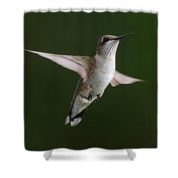 Hovering Hummer 3 Shower Curtain by Kevin McCarthy