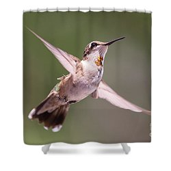Hovering Hummer 4 Shower Curtain