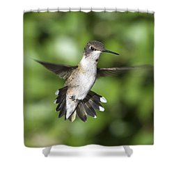 Shower Curtain featuring the photograph Hovering Hummer by Stephen Flint