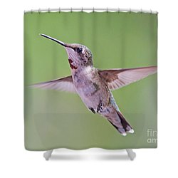 Hovering Hummingbird 5 Shower Curtain