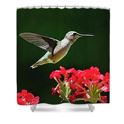 Hovering Hummingbird Shower Curtain by Christina Rollo