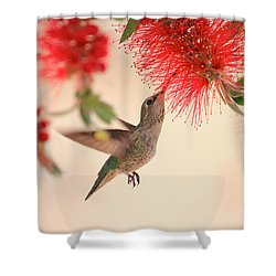 Hovering Hummingbird Shower Curtain