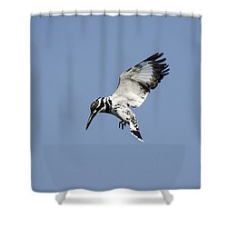 Hovering Of White Pied Kingfisher Shower Curtain