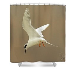 Hovering Tern Shower Curtain by Robert Frederick