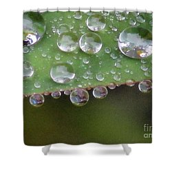 How Many Raindrops Can A Leaf Holds. Shower Curtain