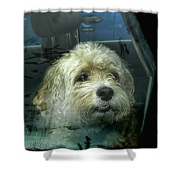 How Much Is That Doggie In The Window Shower Curtain