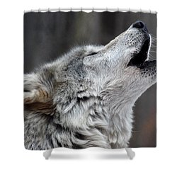 Howl Shower Curtain by Richard Bryce and Family