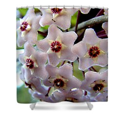 Hoya Blooms Shower Curtain