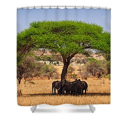 Huddled In Shade Shower Curtain by Adam Romanowicz
