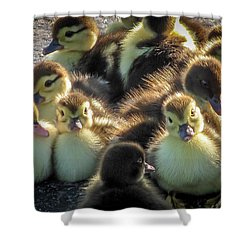 Huddled Together				 Shower Curtain