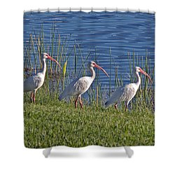 Huey Dewey And Louise Shower Curtain