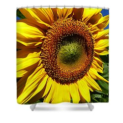 Huge Bright Yellow Sunflower Shower Curtain