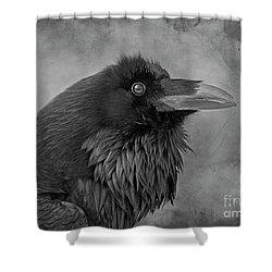 Shower Curtain featuring the photograph Huginn... by Nina Stavlund