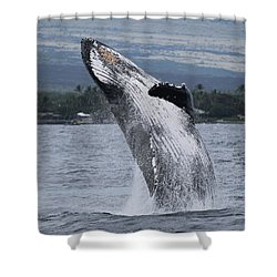 Shower Curtain featuring the photograph Humback Whale Breaching by Pamela Walton